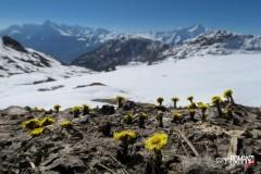 Timida primavera (salendo al Lago Fallère   Saint Pierre)