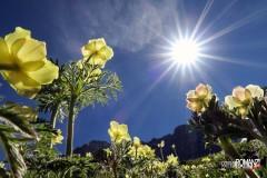 Inno al sole