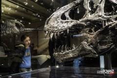 A tu per tu con il Tirannosauro Rex (Berlino)