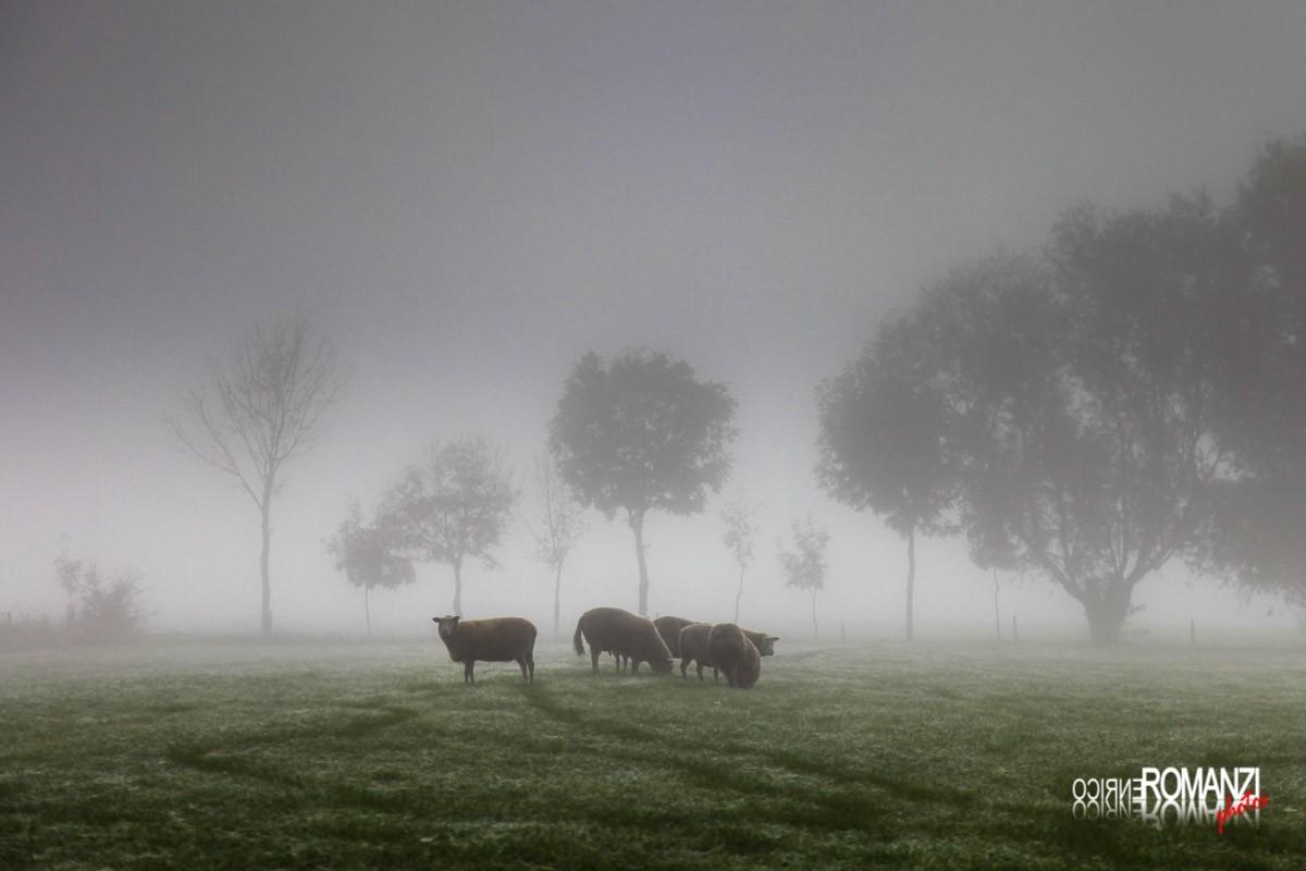 Normandia per portfolio (foto Enrico Romanzi)