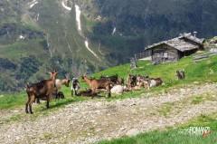 Alpeggio nella Val Ridanna (Bolzano)