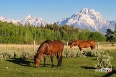 Hatchet Resort di Moran Grand Teton National Park