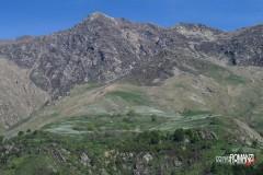 Fioritura dei narcisi sulle montagne di Castelnuovo Nigra